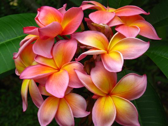 Hawaiian Lei Traditions Kauai Kolea