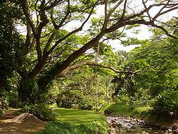 250px-McBryde_Garden,_Kauai,_Hawaii_-_stream_view