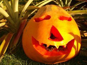 PapayaPumpkin