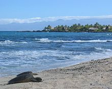 220px-Sea_turtles_on_beach_in_hawaii